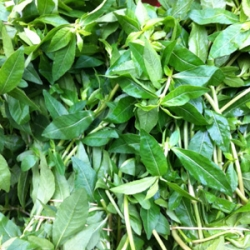 Purple Green Spinach 500g
