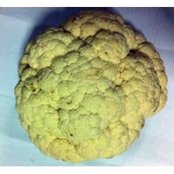 Cauliflower Approx 1kg